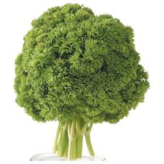 Parsley -  Curly (Bunch of 5) - Virgara Fruit & Veg, Adelaide wide free fresh fruit & veg delivery