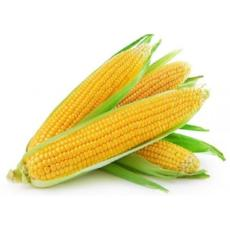 Sweet Corn - Virgara Fruit & Veg