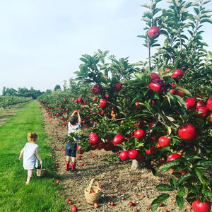 local farms for cherries picking