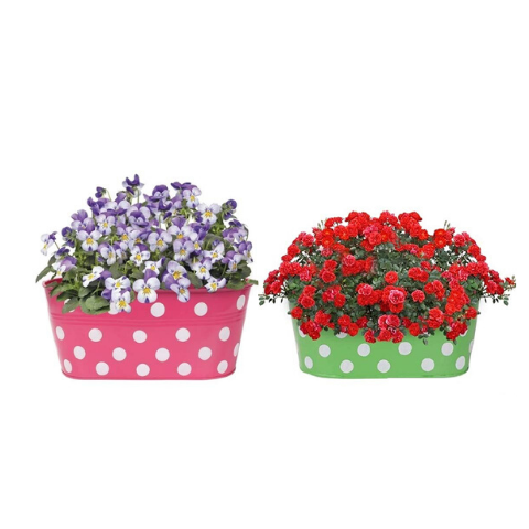 Hanging Flower Pots @Buy-1-Get-1 Dotted design Small Green & Pink - Wudore.com