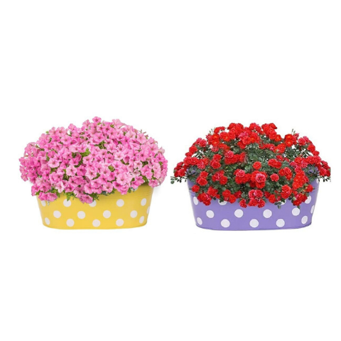 Hanging Flower Pots @Buy-1-Get-1 Dotted design Small Yellow & Purple - Wudore.com