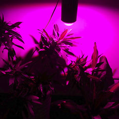 Full Spectrum Led Grow Lights For Hydroponics Cultivation Flowers - ePeriod Led Lighting Store