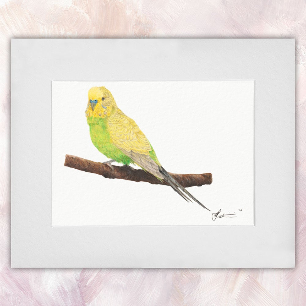 Spangle Light Green Budgerigar