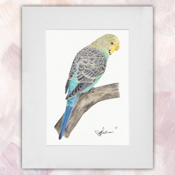 Yellow-headed Skyblue Budgerigar