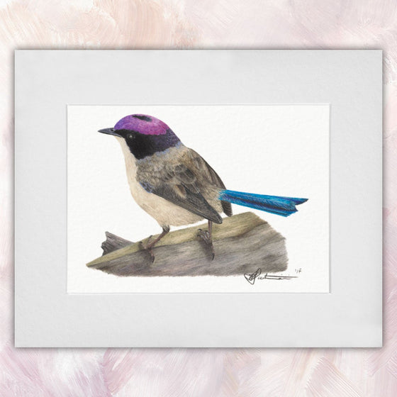 Purple-crowned Fairywren