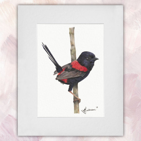 Red Backed Fairywren