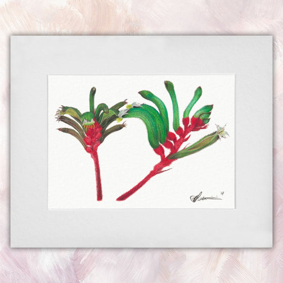 Red & Green Kangaroo Paw