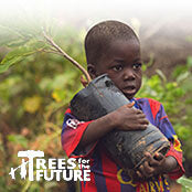 trees for the future environmental charity
