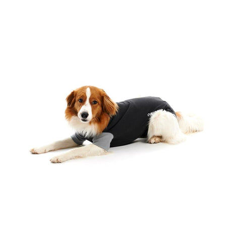 Buster Easygo Body Suit for Dogs
