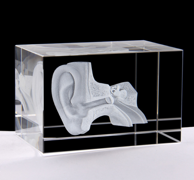 Holographic Ear Model