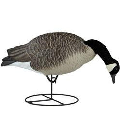Dakota Canada Flocked Feeder Decoys (6pk)
