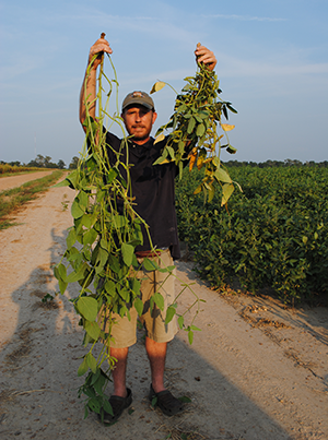 Tyrone Forage Soybeans (CALL (870) 732-5151 OR EMAIL mark@ljrogerswildlifeseeds.com FOR PRICING)