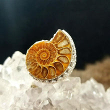 Natural Ammonite Fossil Rings || Various Sizes || Spiral Energy