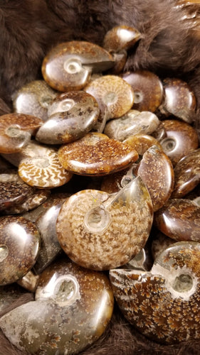 Earthy Ammonite Fossil || Spiral Energy