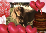 Chocolate and Tan Miniature Dachshund Longhair