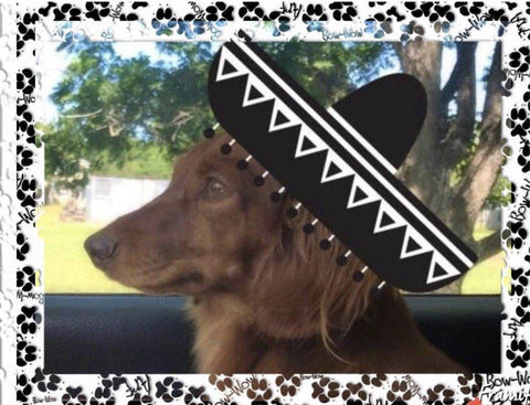 Miniature Dachshund Puppies for sale San Antonio Houston Texas - Muddy River Dachshunds