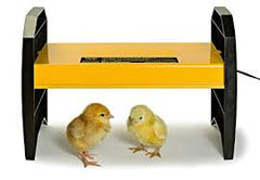 Ecoglow 20 Chick Brooder - Safe and Efficient
