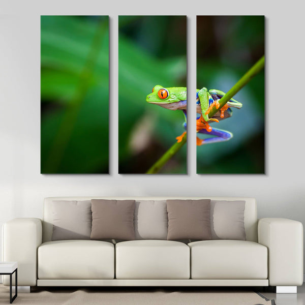 3 piece Red Eye Frog wall art