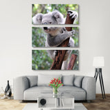 3 piece Curious Koala wall art