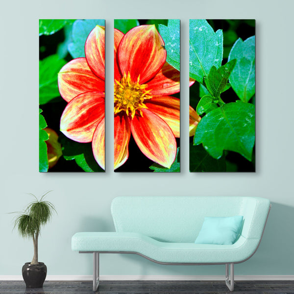 3 piece Dahlia Bishop of Llandaff flower wall art