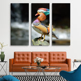 3 piece Mandarin Duck wall art