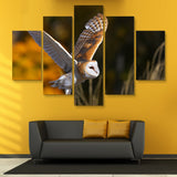 5 piece Barn Owl wall art
