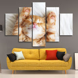 5 piece Sleeping Kitten wall art