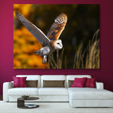 Barn Owl wall art