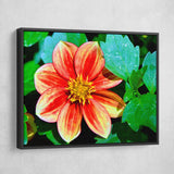 Dahlia Bishop of Llandaff flower wall art black frame