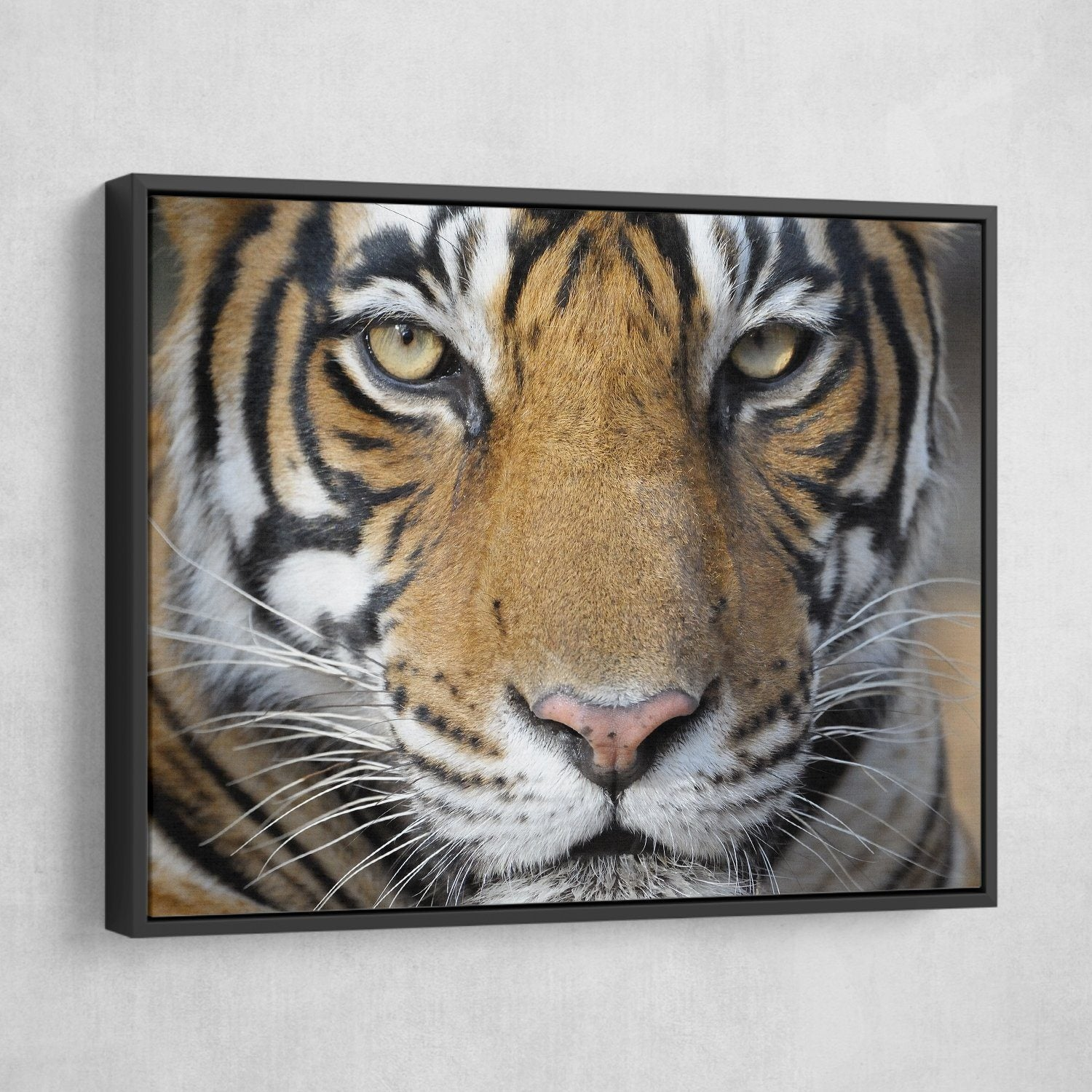 Bengal Tiger wall art floating art