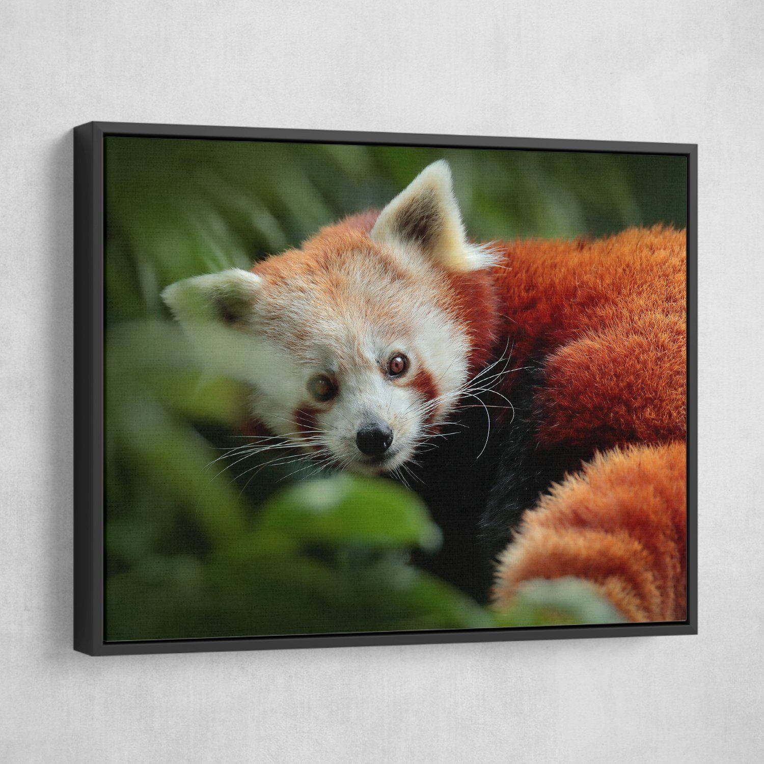 Panda from Nature wall art floating frame