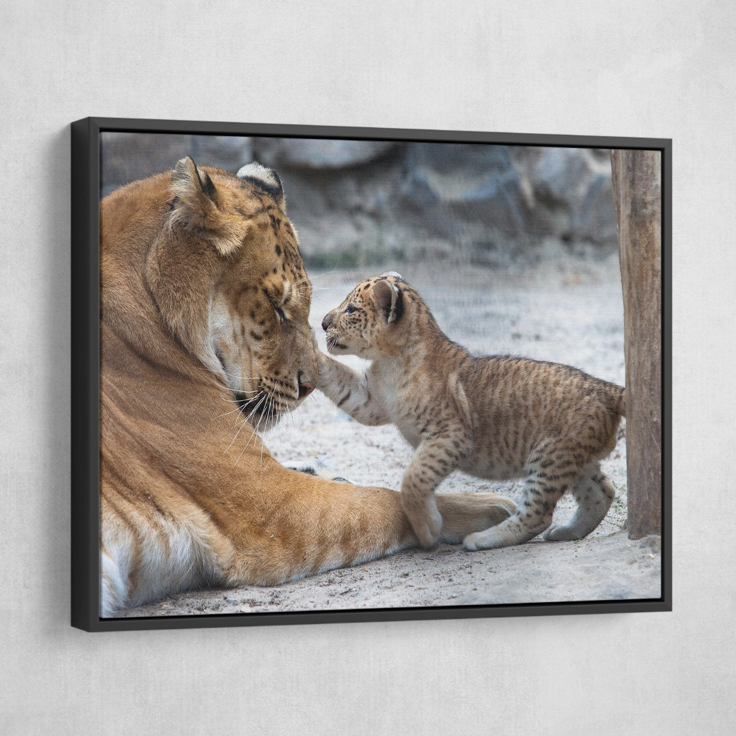 Lion and Cub wall art black frame