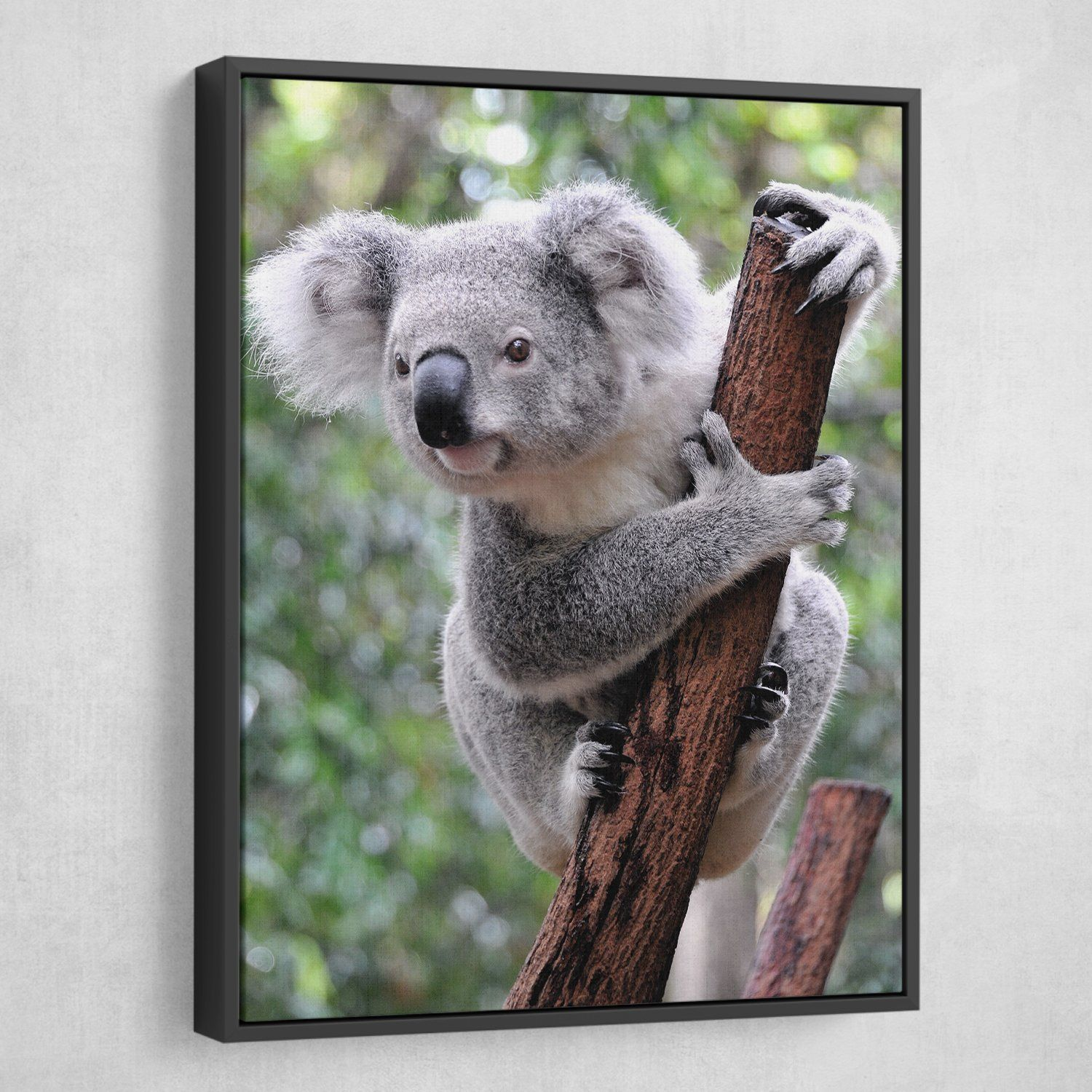 Curious Koala wall art floating frame