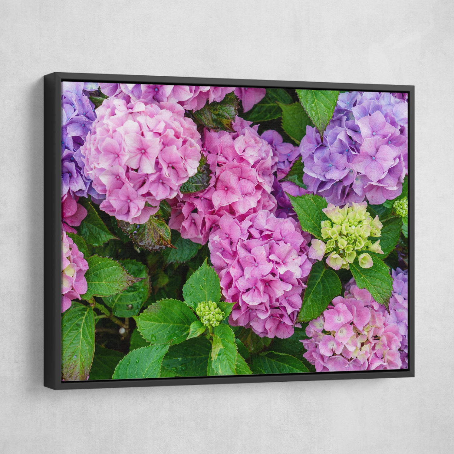 Hydrangea Flowers wall art black frame