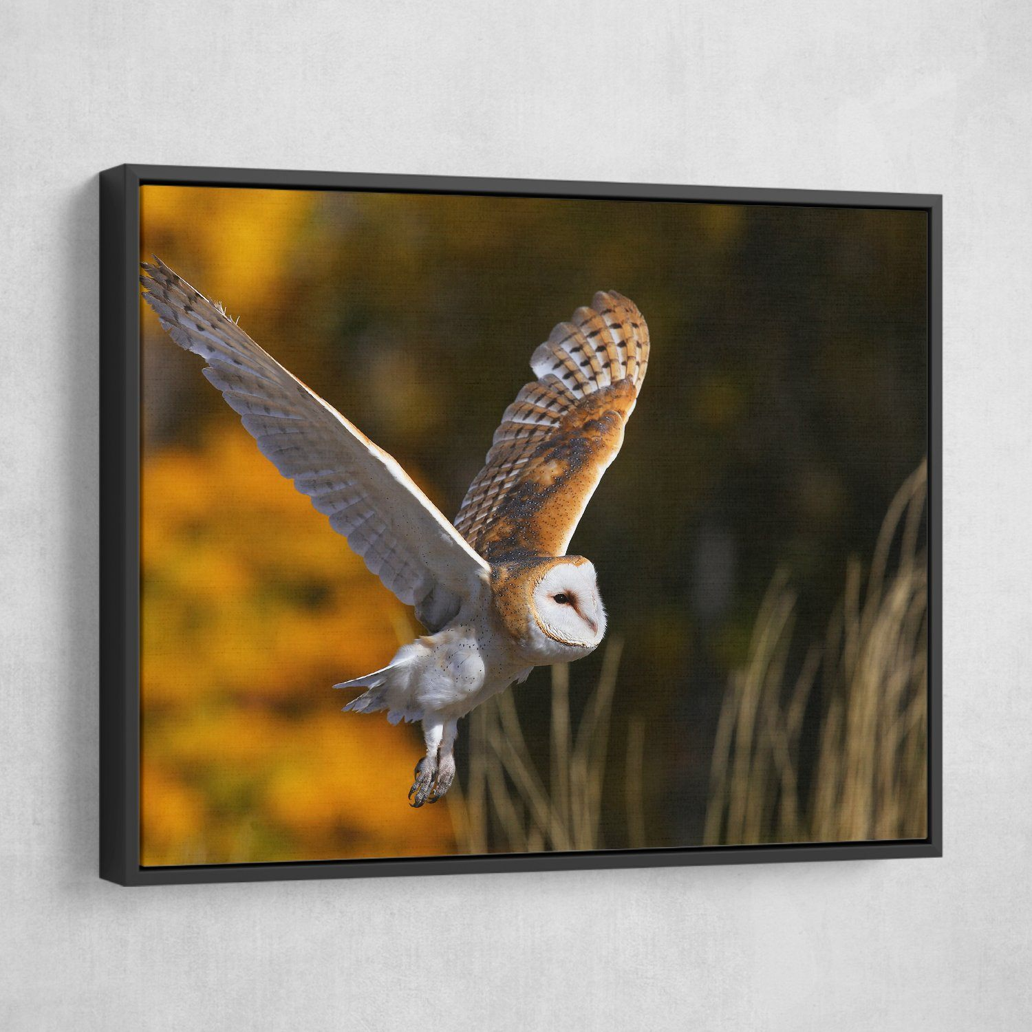 Bird Owl wall art