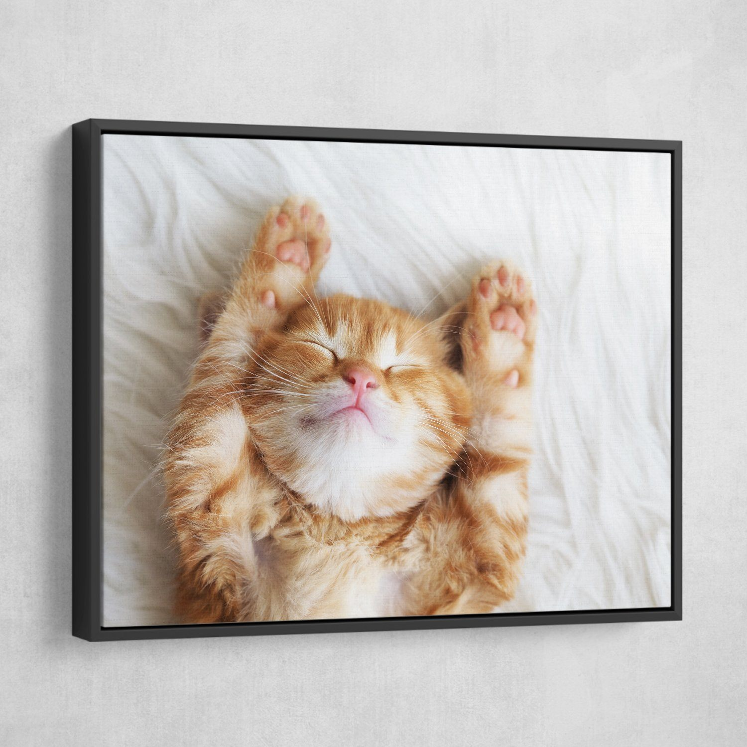 Sleeping Kitten wall art floating frame