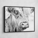 Scottish Cow wall art black floating frame