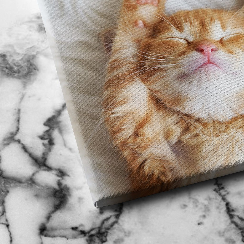Sleeping Kitten canvas art