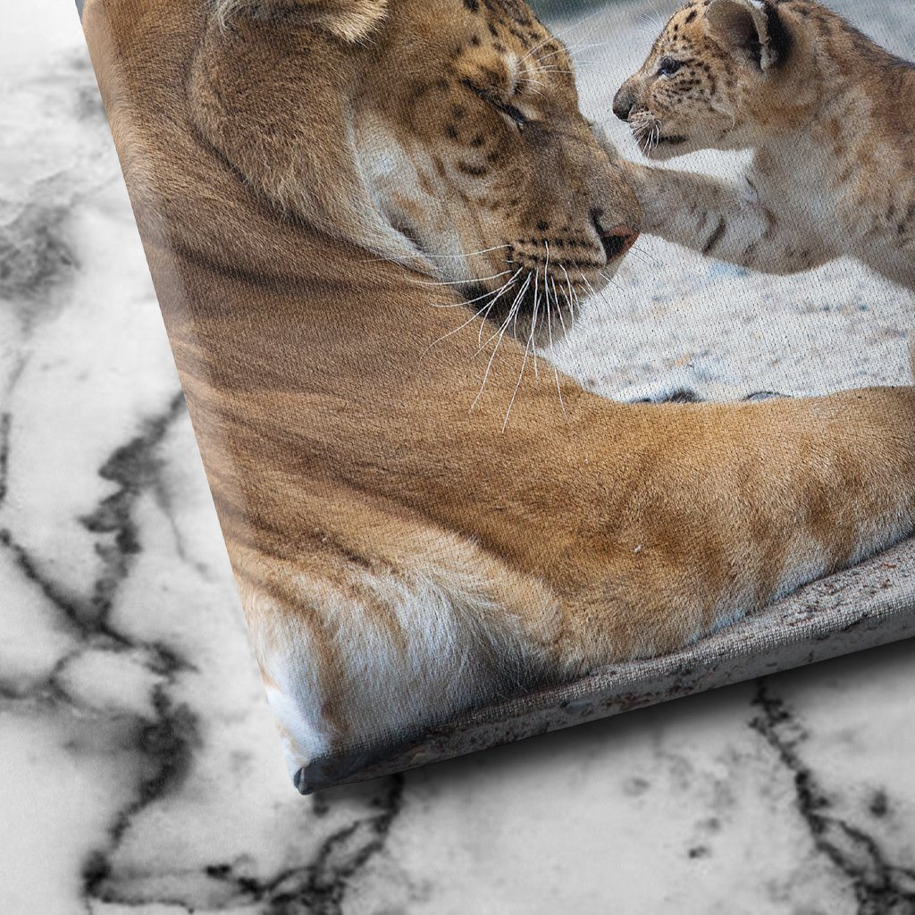 Lion and Cub canvas art