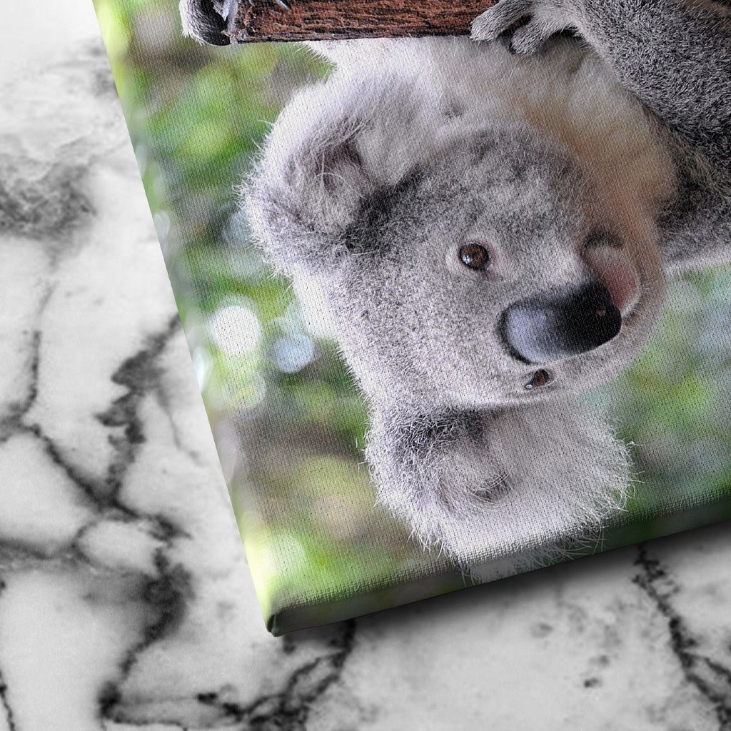 Curious Koala canvas art