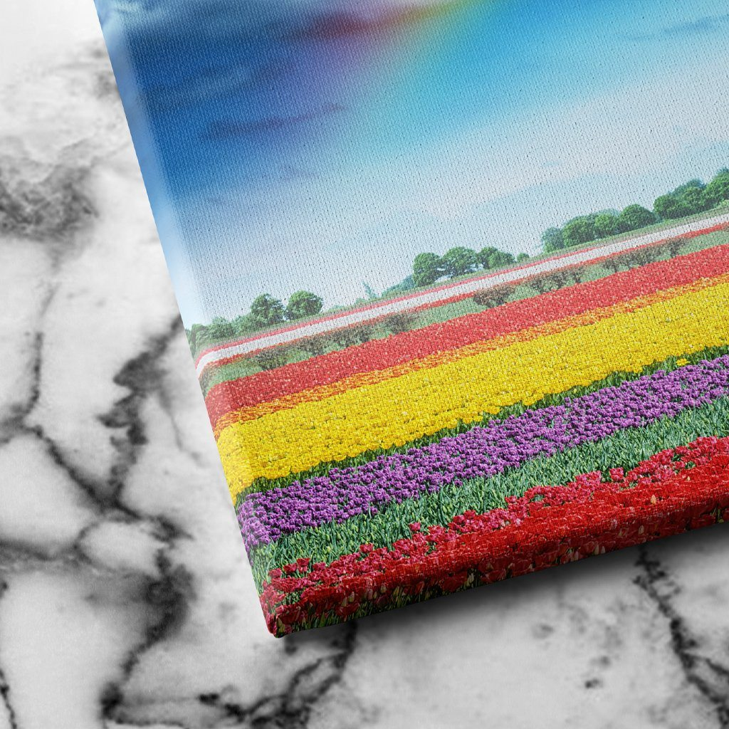 Rainbow Over Tulips canvas art