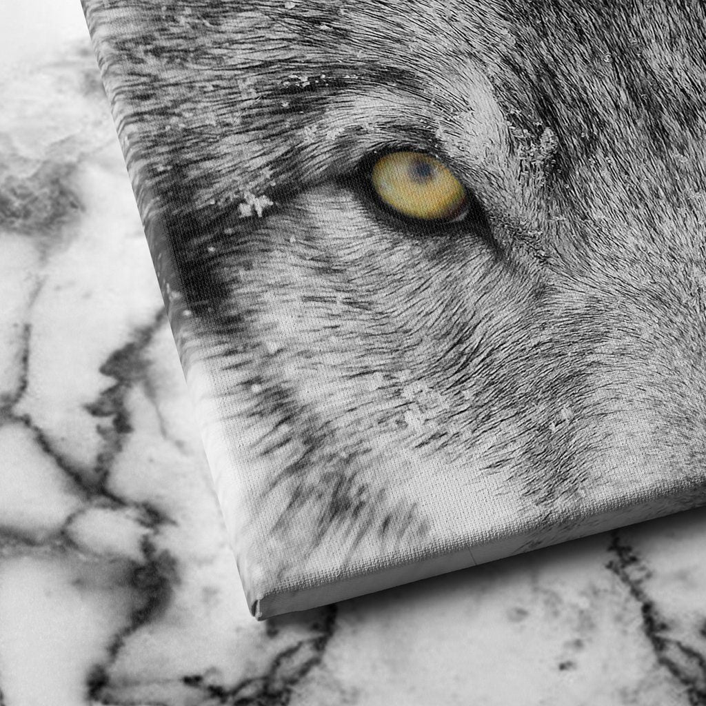Timber Wolf canvas art