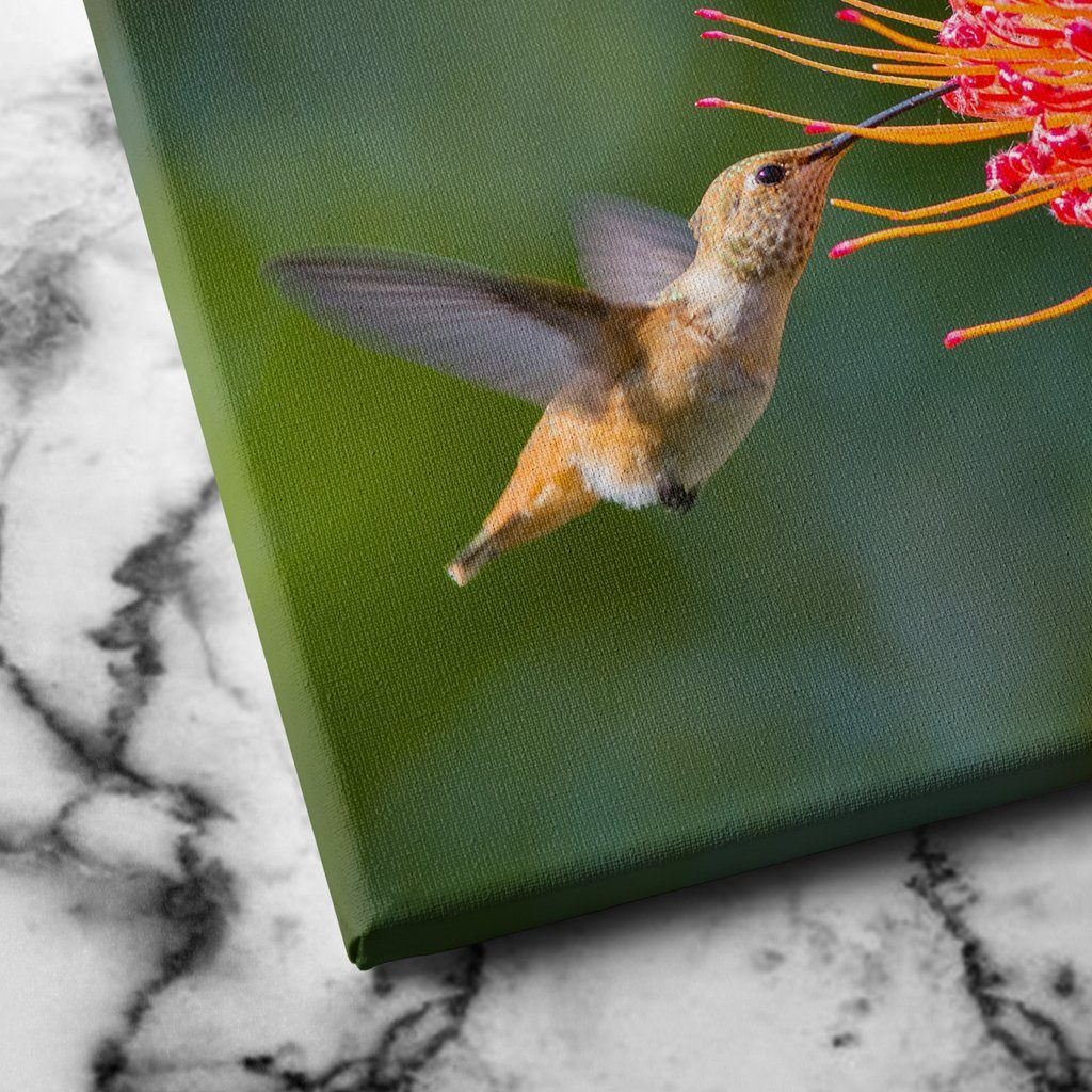 Working Hummingbird canvas art