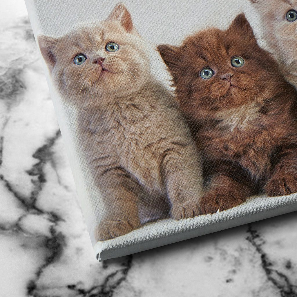 Four Kittens canvas art