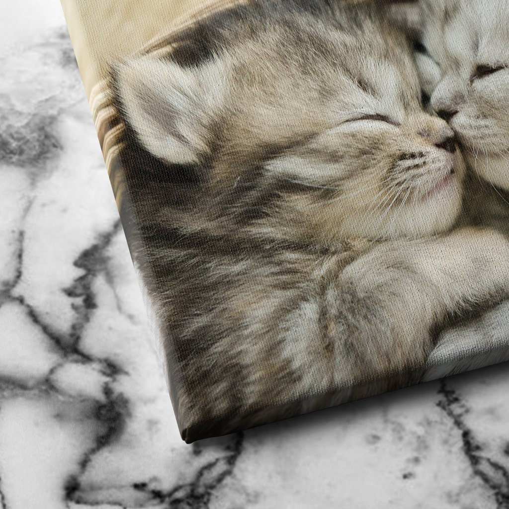 Kitten Hugs canvas art