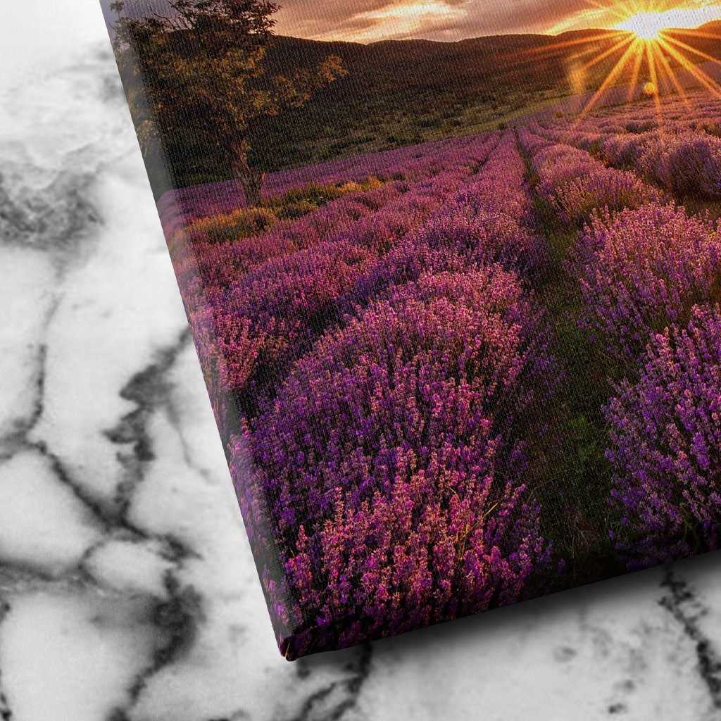 Lavender Field canvas art