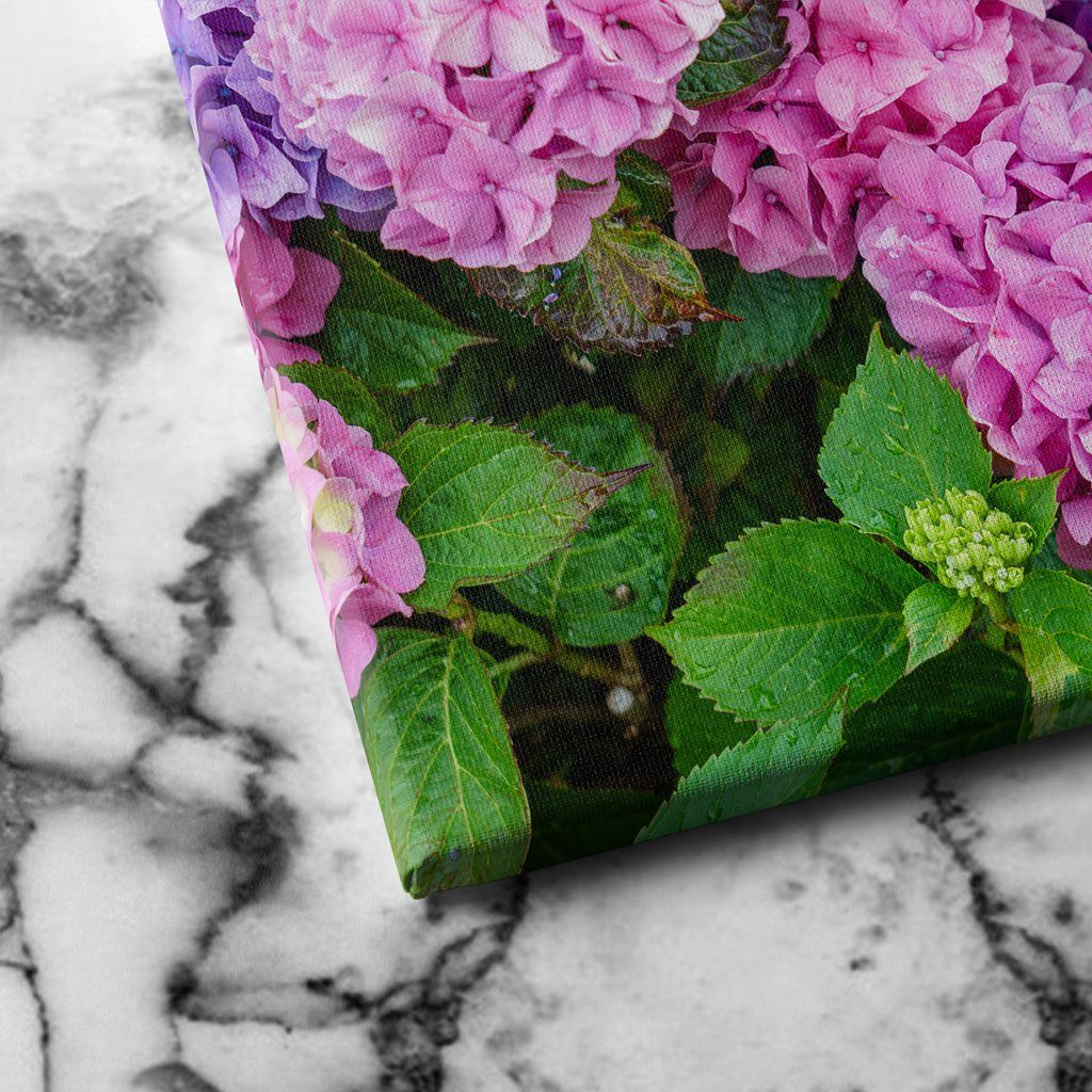 Hydrangea Flowers canvas art