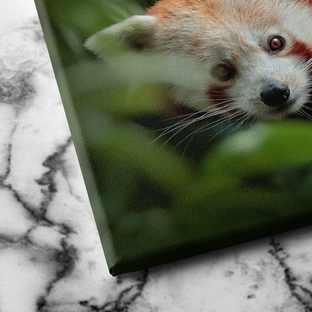 Panda from Nature canvas art