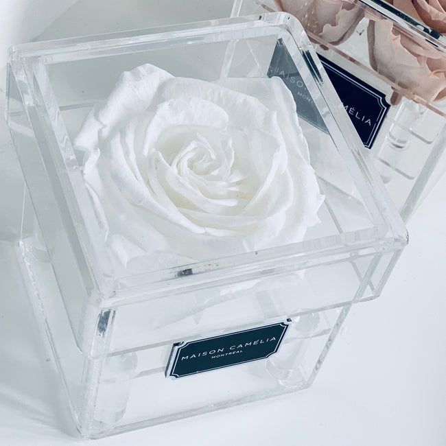 La Mini with Premium Eternal Rose