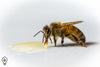 encycloBEEdia: Why Do Bees Need Honey?